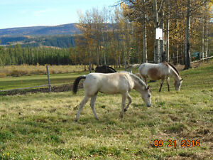 broodmares small, to approved home, w/yearling fillies