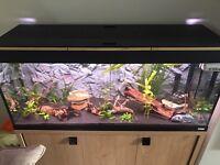 Fluval Roma 240 Tropical Fish Tank
