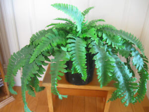 VINTAGE DEEP GREEN ARTIFICIAL FERN
