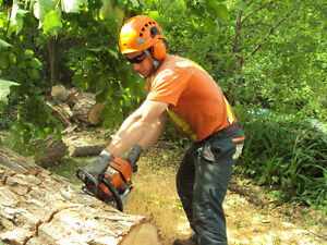 TOP NOTCH TREE SERVICE !!TREE REMOVAL 50% OFF STUMP GRINDING!! London Ontario image 4