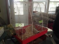 Female Russian Dwarf Hamster with Everything