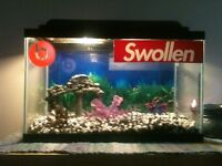 Nice fish tank only thing needed is the bubbler mint condition