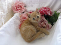 ~~~ Stunning Rescue Kittens - MUST SEE!! ~~~