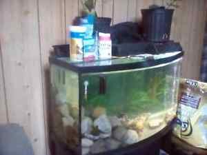 BOW FRONT 55 GALLON AQUARIUM SETUP  with curved stand