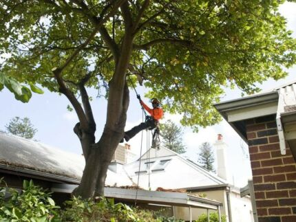 Tree Removal, Tree Pruning, Palms, Stump Grinding