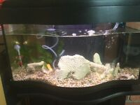 Fish tank and all equipment