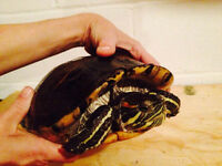 Red Ear Slider Turtle and tank