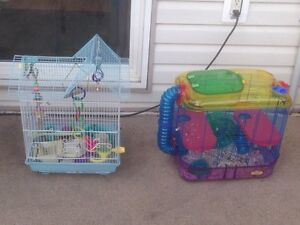 Hamster and bird cage