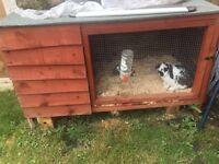 Rabbit and hut