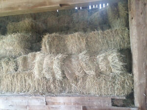HAY square bales .