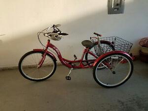 Adult trike bike