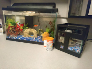 10 gallon tank and everything you need