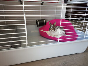 Netherland Dwarf Bunny/Rabbit/Cage/Accessories/Food
