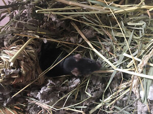 BABY MICE NEED HOME