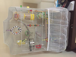 Parakeet to a loving home