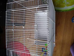 Cage oiseaux grande