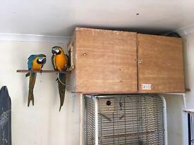 Macaw or large birds breeding box