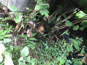 WANTED: SOMEONE TO REMOVE WEED FROM UNDER MY DECK
