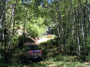 Gold River B.C. Large House Lot for Sale $69,900 Campbell River Comox Valley Area image 5