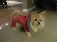 Snowsuit for Very Small Dog
