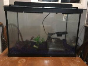 20 gallon Aquarium