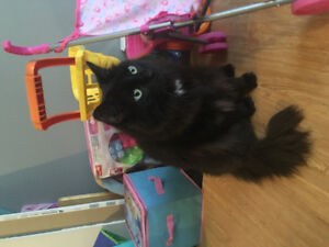 8 Year Old Brothers Need Forever Home ! St. John's Newfoundland image 3