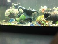 96ltr fish pod tank with fish
