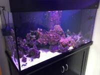 AQUAREEF 400 MARINE TANK COMPLETE SET UP