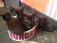 2 kittens, I black & 1 black and white 8 weeks old