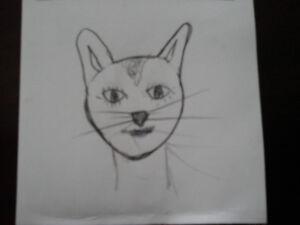 Cherche chaton femelle domestic