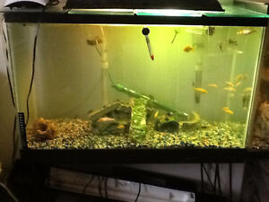 Fish tank new used pet accessories in saskatoon for National geographic fish tank filter