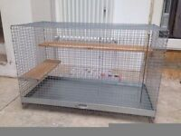 Degu for sale with complete set up