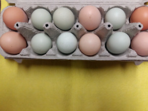 Hatching eggs: Easter eggers and Olive eggers or barnyard mix.