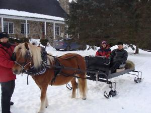sleigh et attelage