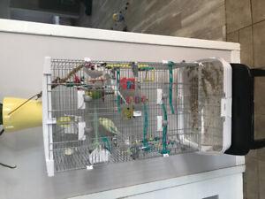 3 perruches avec 2 cage Vision qui en font une grande