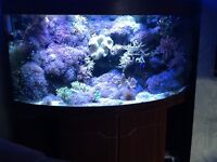 marine full tank with sump set up