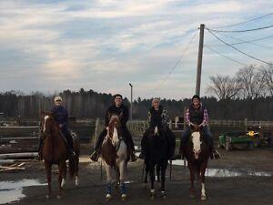 Pension pour chevaux Gatineau Ottawa / Gatineau Area image 5