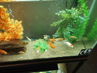 Looking for a good home for our goldfish