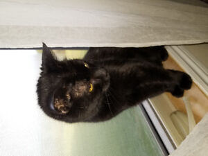 lovely free cat looking for great home
