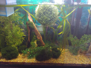 Fish tank with plants and fish