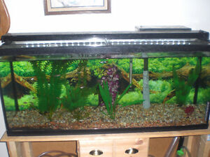 55 gallon fish tank for sale