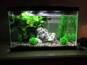 Aquarium avec Momie a vendre