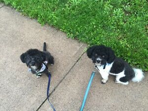 Are you looking for a reliable dog walker or pet sitter?!