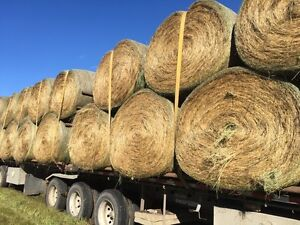 Horse and cattle hay