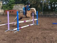 Super 2nd Pony For Sale
