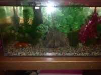 fish tank with goldfish(moving need gone)