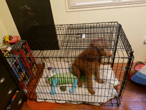 Dog wash kijiji in ontario buy sell save with canadas 1 xl dog crate solutioingenieria Gallery