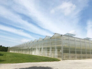 Greenhouses For Sale: 8 Acre Modern Greenhouses in Simcoe