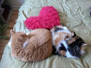 home visit for cats, cat whisperer- Longueuil-south-shore - Mtl