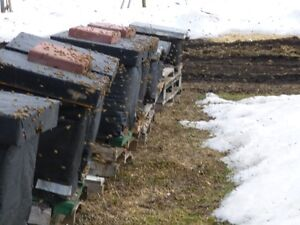 4 Frame Honey Bee Nucs For Sale Spring 2017 Season